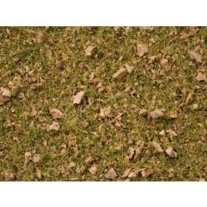 Amestec iarba alpin / pasune 2,5-6 mm