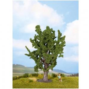 Stejar, 15 cm