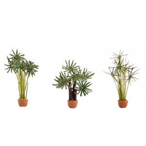 Plante ornamentale in ghiveci , 3buc